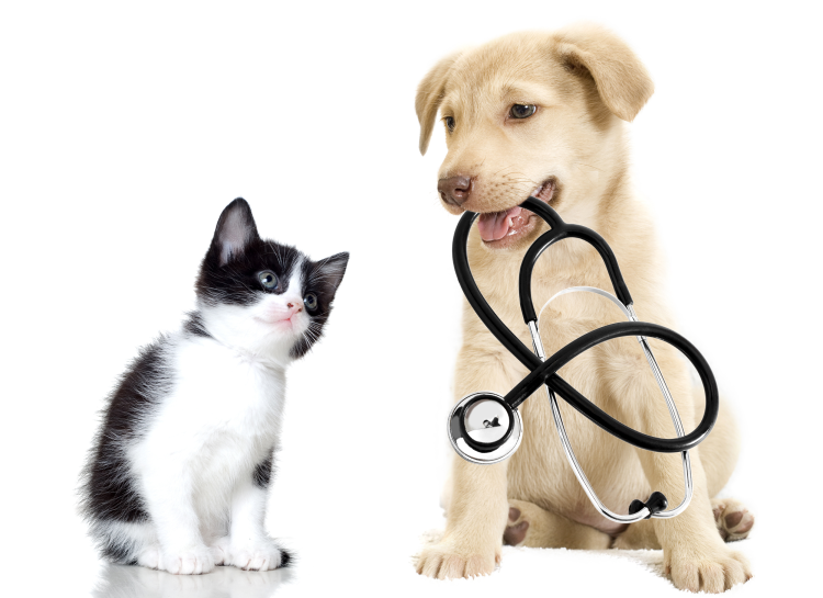 Dog and cat - Vétérinary